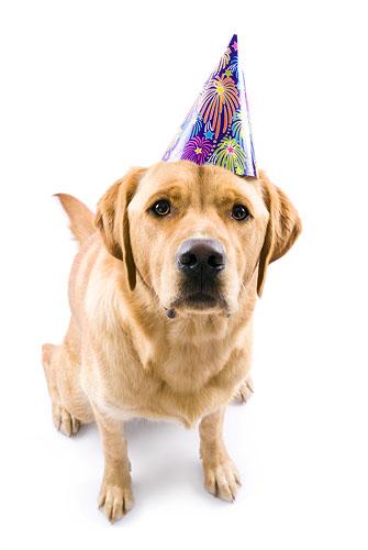 Dermott's 1st Birthday